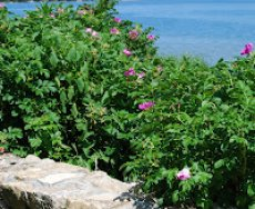 Beach Reading & Mint Lemonade {Naptime Simple Tips}