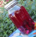 Beet and Ginger Kvass Treat Your Liver Good!