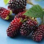 Blackberrie Nut Muffins Recipe